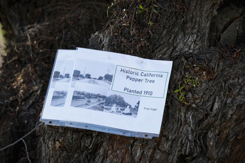 In this 2020 photos, flyers are attached to pepper trees slated to be cut down.