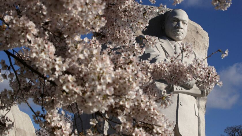 Peak Bloom Hits During National Cherry Blossom Festival in Washington DC