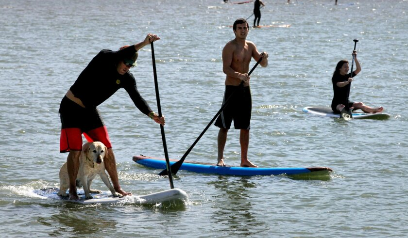 """Instructor Casey Sullivan, of Encinitas, paddles with his dog named """"Bailey"""" on board Saturday, when stand-up paddleboarders gathered at Agua Hedionda Lagoon to raise money for cancer awareness in honor of cancer patient Hunter Chanove."""