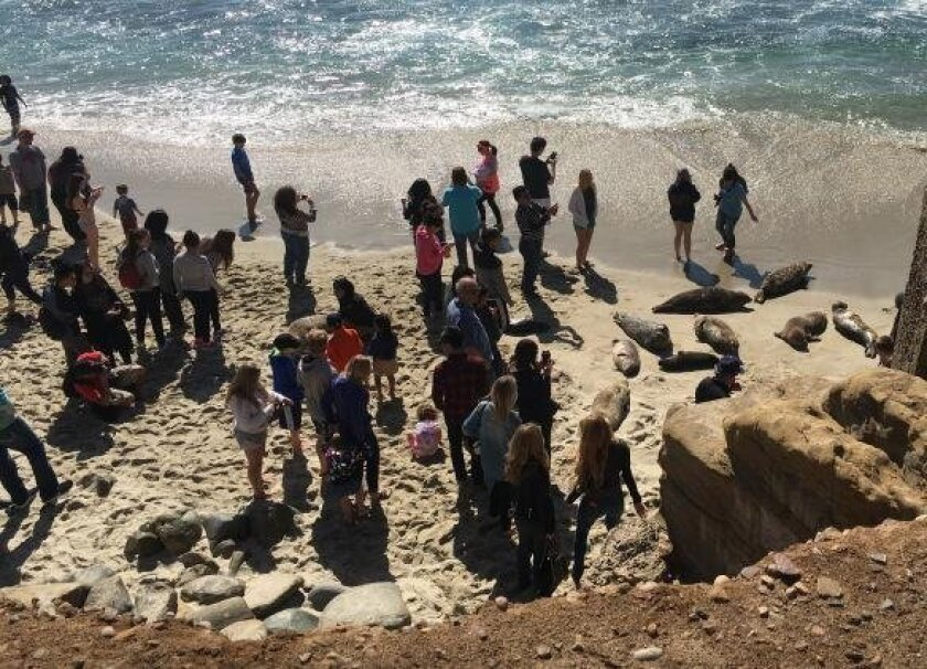The petitioners have this photo of people crowding the seals at Children's Pool in March on their website.