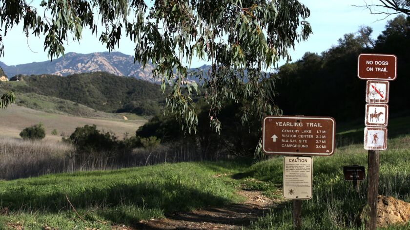 LOS ANGELES CA. MARCH 9, 2016: The start of the yearling trial, at Malibu Creek State Park, Reagan