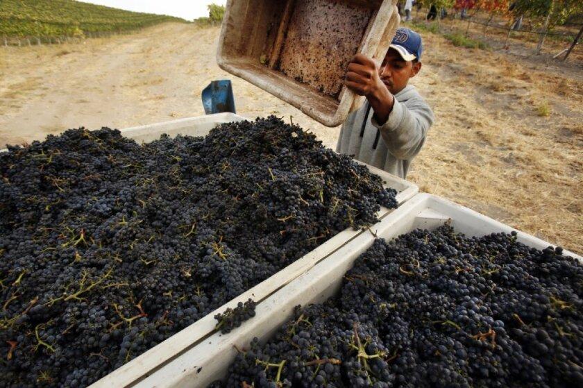 California grape harvest rebounds to a record