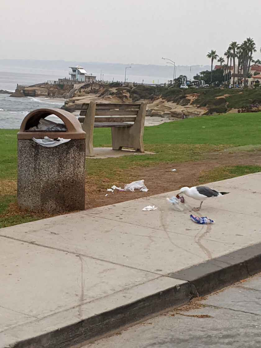 Jan Hageman wants new trash cans in La Jolla to take the place of containers like this one that seagulls can get into.