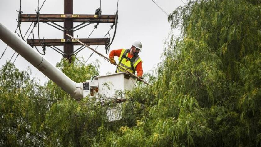 San Diego Gas & Electric worker trims a tree.