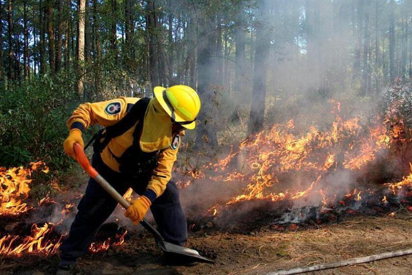 Fotografía sin fecha cedida por la Comisión Nacional Forestal (Conafor) que muestra a personal de rescate mientras combate un incendio forestal en Tlaxcala (México). Las autoridades forestales de México pronosticaron hoy una temporada de incendios de mayor intensidad y extensión para el país, que durante los primeros 18 días del año ya ha registrado 82 siniestros. EFE/Conafor/SOLO USO EDITORIAL