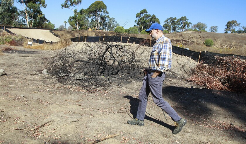 Oak Park resident Bruce Thompson walks by a burned spot in North Chollas Community Park on Oct. 4, 2019. Thompson, who is a member of the Oak Park Community Council, and others are frustrated because they think people who are living in the open spaces are creating fire hazards.