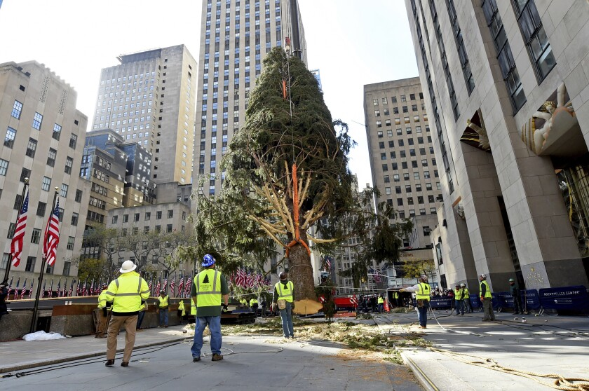 IMAGE DISTRIBUTED FOR TISHMAN SPEYER - The 2019 Rockefeller Center Christmas tree, a 77-foot tall, 12-ton Norway Spruce from Florida, N.Y., is craned into place, Saturday, Nov. 9, 2019, in New York. The 87th Rockefeller Center Christmas Tree Lighting ceremony will take place on Wednesday, Dec. 4. (Diane Bondareff/AP Images for Tishman Speyer)