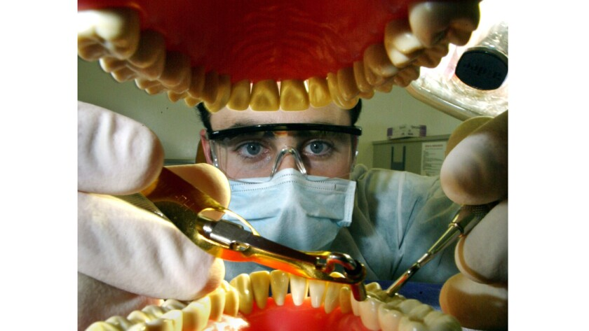 File photo of dental student working on a practice set of teeth with installing amalgam.