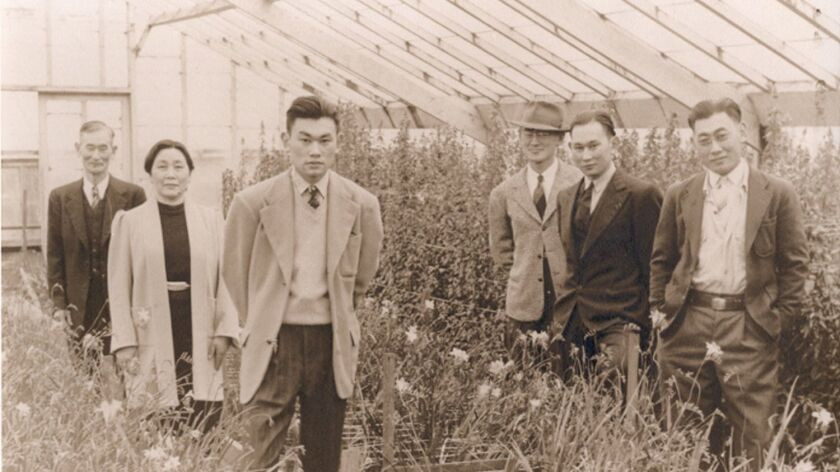 Fred Korematsu at the family nursery (third from left) Undated photo. Photo used with permission. Cr