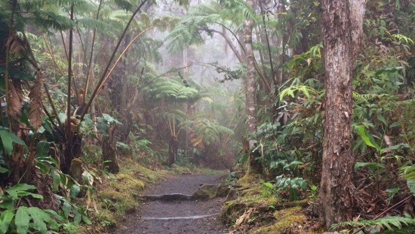 Crater Rim Trail in Hawaii Volcanoes National Park is one of the areas that scientists, teamed with the public, will explore for BioBlitz.