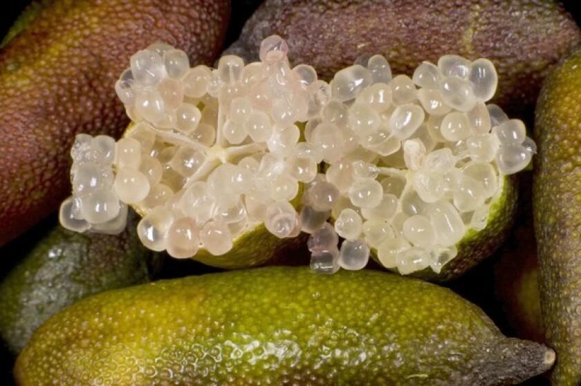 Australian finger limes grown by Jim Shanley of Venice Hill Ranch in Visalia, available soon at the Santa Monica farmers market.
