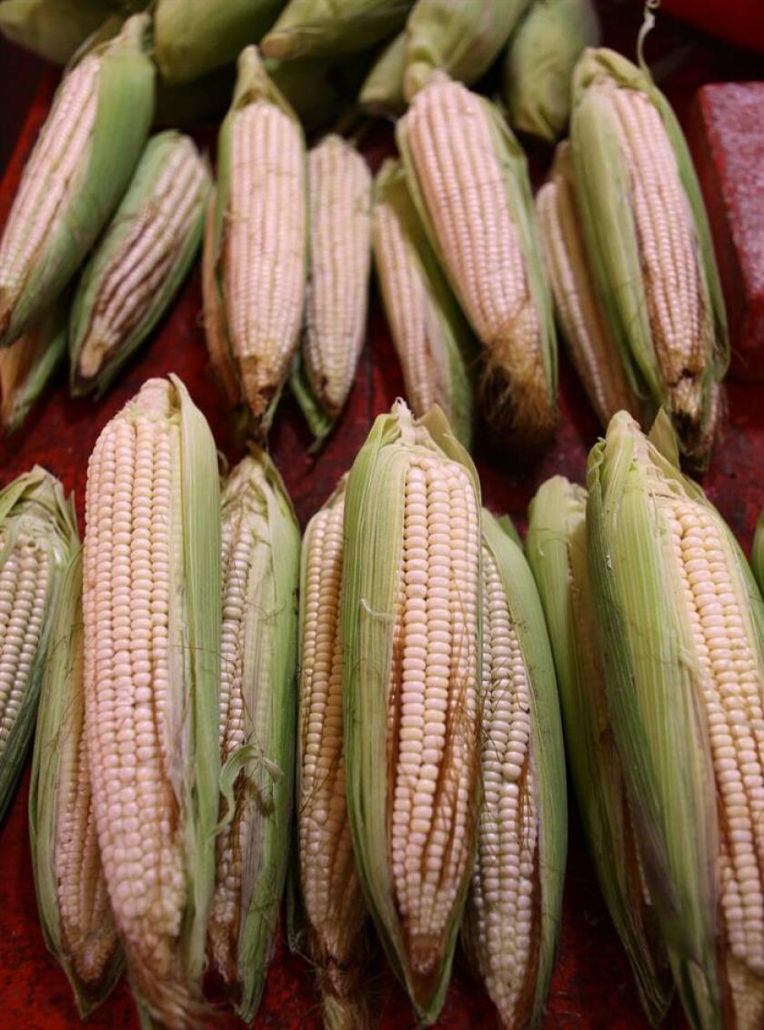 Photo taken March 23, 2013, showing cobs of corn ready for sale at a Mexico City market. EFE-EPA/ Sashenka Gutierrez/File