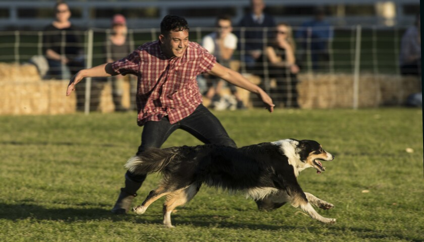 PACIFIC PALISADES, CALIF. -- SATURDAY, FEBRUARY 3, 2018: Ryan Tacata with a border collie performs i