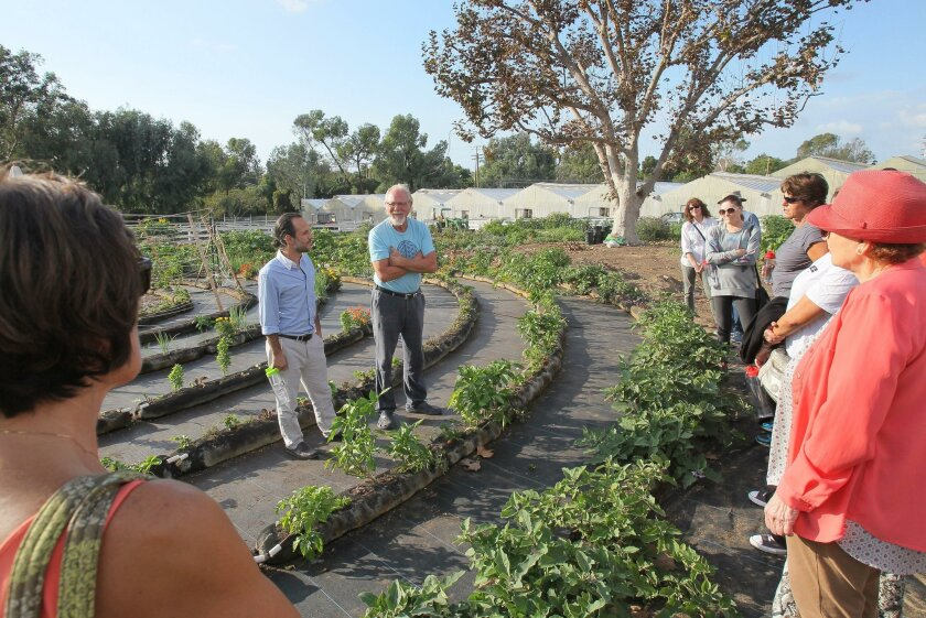 At Coastal Roots Farm, a Leichtag Foundation project in Encinitas, Simcha Schwartz (left) and Juaquin Hershman help guests chose herbs for a Shabbat table centerpiece. This year's Shabbat San Diego begins tonight and ends Saturday