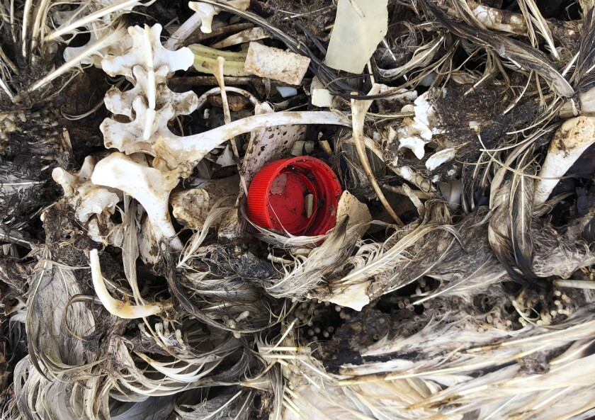Seabird Sanctuary Plastic Death