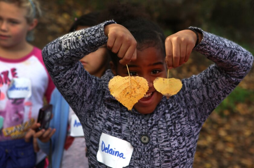 Delaina Rojas-Jones, a fourth-grader from Skyline Elementary School in Solana Beach, discovers cottonwood tree leaves during an educational hike at San Elijo Lagoon. / photo by Bill Wechter * U-T San Diego