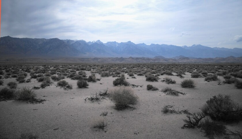 Scrub brush near dry Owens Lake; to preserve Inyo County ranches, environmentalists have agreed to curtail water diversions for restoration of the Lower Owens River and controlling dust on the dry lake bed.