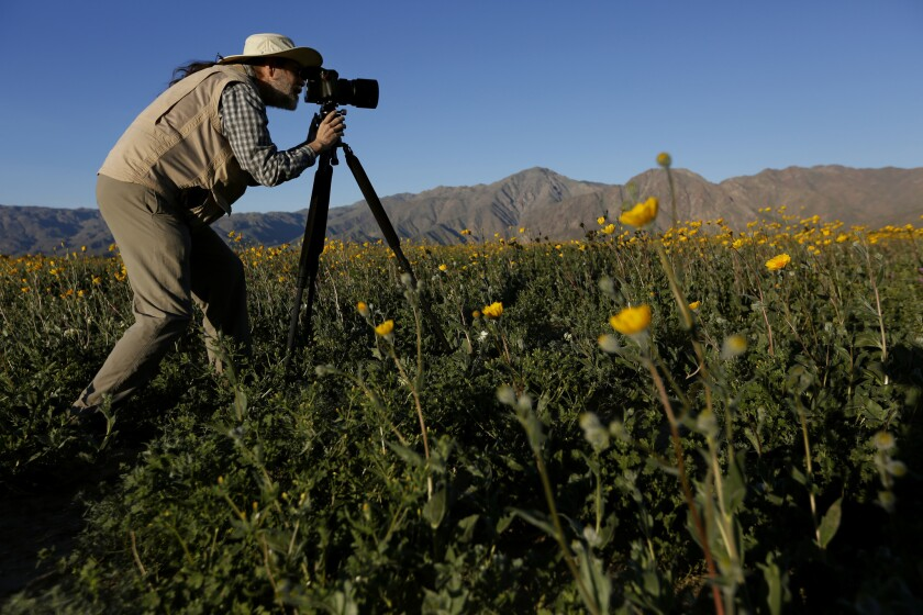 Mike Lightner photographs flowers, in the Anza Borrego Desert State Park in San Diego County in March 2017.