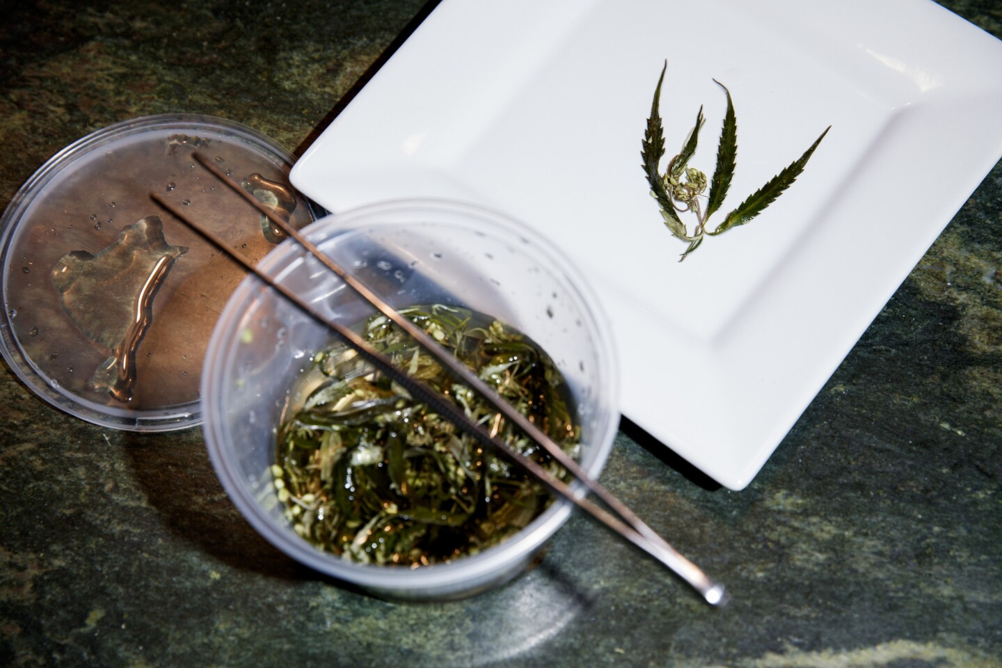 Chef Holden Jagger displays a pickled marijuana leaf before making a dinner showcasing the plant as an ingredient in multiple courses.