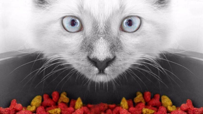 Consejos para preparar la comida de su gato.