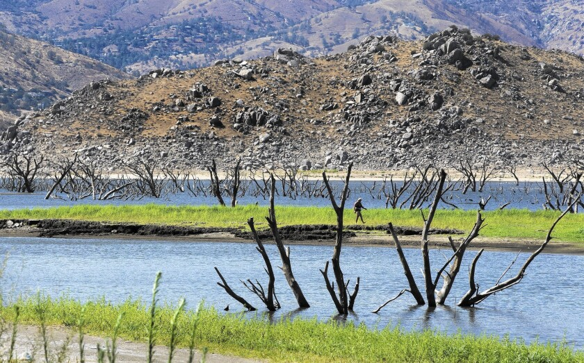 Branches of dead trees emerge from Lake Isabella as the water level recedes.
