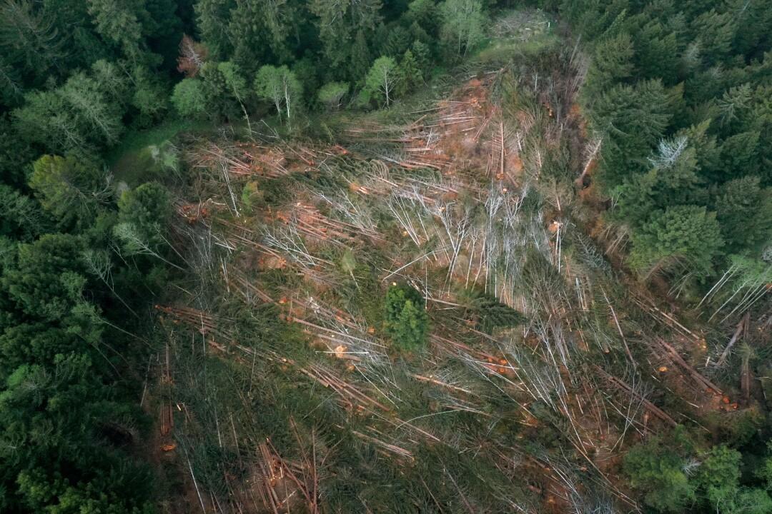 Les défenseurs de la forêt de Redwood