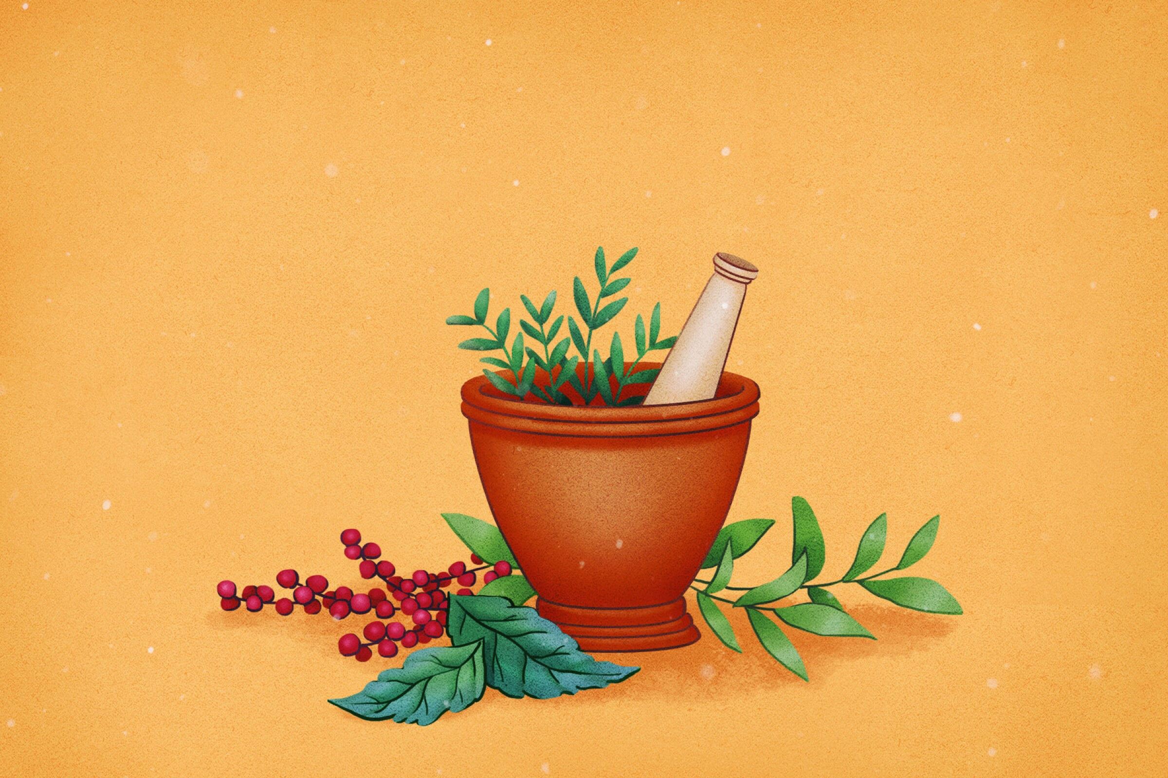 Herbs illustration