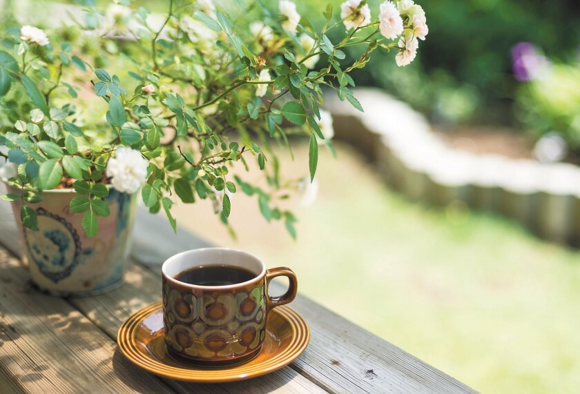 Try to spend some time in the garden every day, even if it's just while you are drinking your morning coffee.