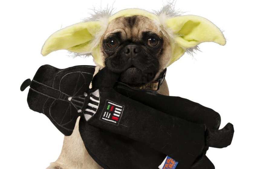 Yoda ears are one of the more than 50 Star Wars-themed products that Petco and LucasFilm will offer in the pet retailer's stores starting Sept. 1.