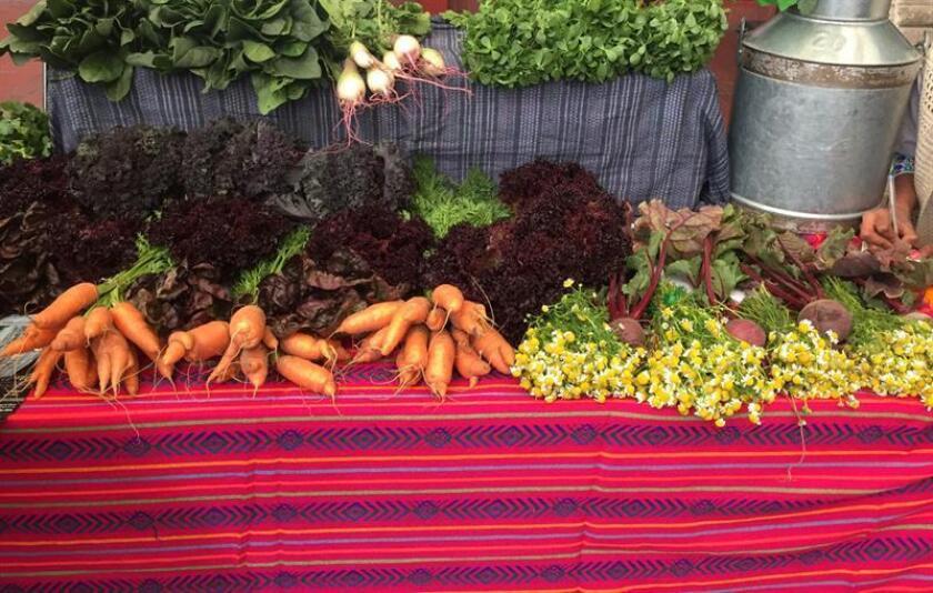 Vista de hortalizas de las chinampas, extensiones agrícolas rectangulares que se sostienen sobre el agua de los canales de la zona periférica de Xochimilco (México). EFE/Archivo