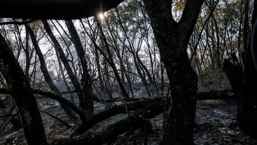 NAPA, CALIF. -- THURSDAY, OCTOBER 12, 2017: Fires moved quickly through the slopes with thick underg