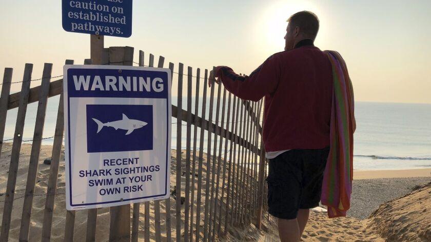 Steve McFadden of Plattsburgh, N.Y., visits Long Nook Beach in Truro, Mass., last month amid heightened warnings of sharks.