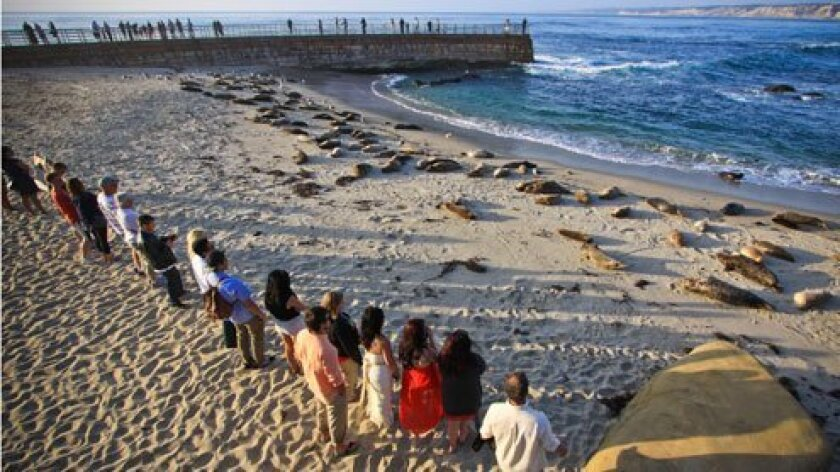 The California Coastal Commission voted unanimously Aug. 14, 2014 to close Children's Pool beach (a.k.a. Casa Beach) during the the harbor seals' five-month pupping season, Dec. 15-May 15. (La Jolla Light photo)