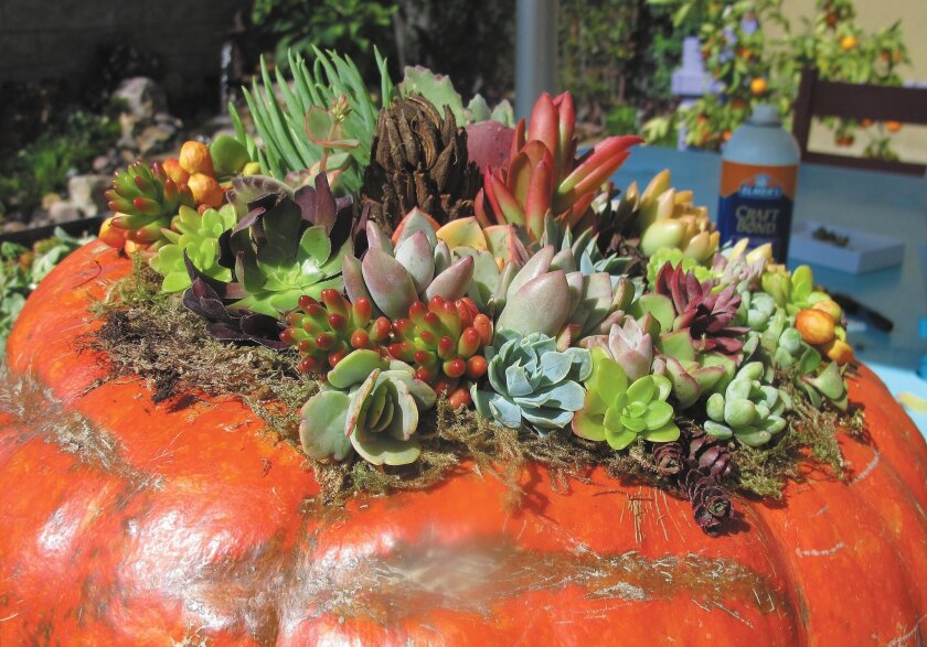Laura Eubanks created this pumpkin adorned with succulents.