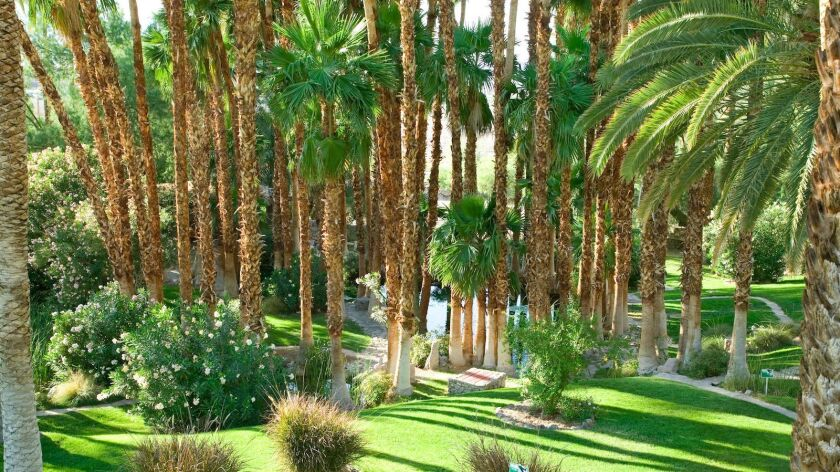 Palm trees at the inn's Oasis Garden.