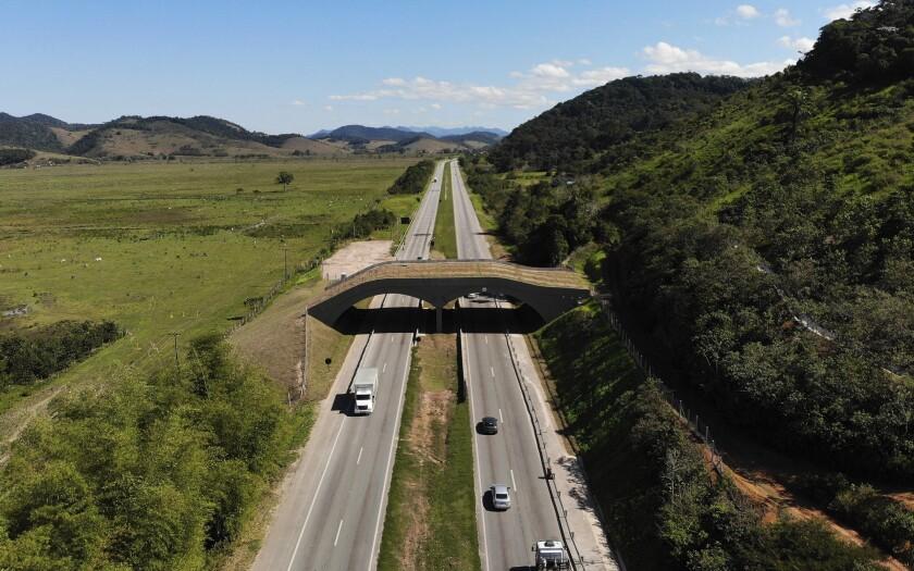 Un puente une partes de la selva sobre una carretera interestatal en Silva Jardim, estado de Río de Janeiro, en Brasil