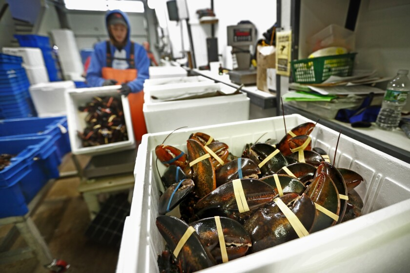 FILE- In this Sept. 11, 2018, file photo, lobsters are packed at a shipping facility in Arundel, Maine. America's lobster industry recovered from the Trump trade war to have a good 2020, but it is approaching one of the busiest times of the year with trepidation because of coronavirus. Chinese New Year shipments will be complicated by the virus this year. (AP Photo/Robert F. Bukaty, File)