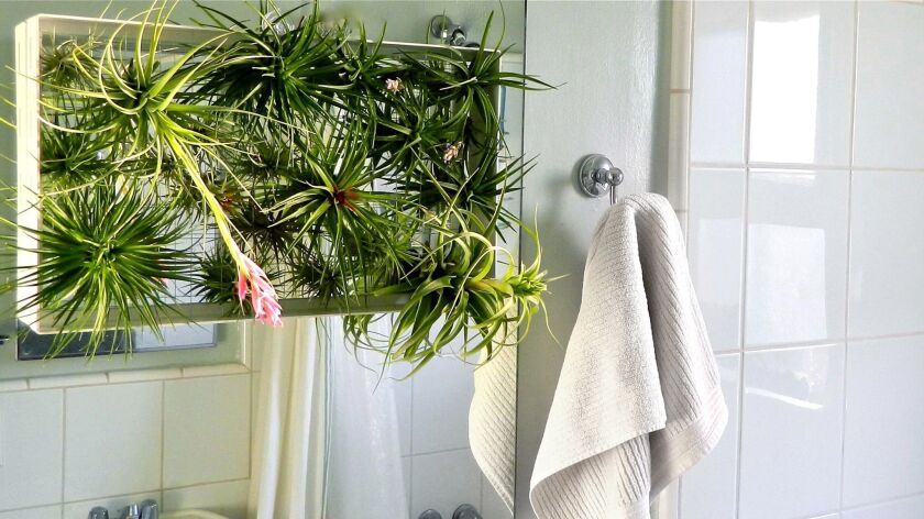 DESIGN PROBLEM: A plant that can survive the humidity of a bathroom SOLUTION: A powder-coated alumi