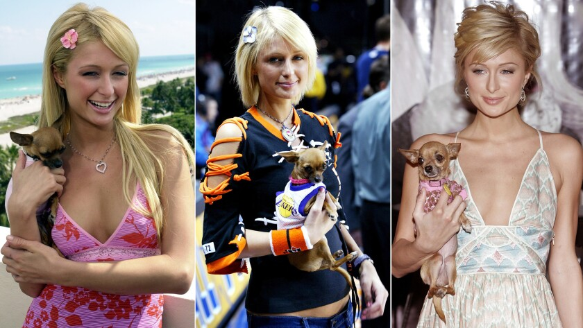 Paris Hilton with her first dog, Tinkerbell, in Miami Beach in March 2004, left; at the NBA All-Star Celebrity Game in L.A. in February 2004; and in New York at a November 2005 event to launch her limited-edition Tourneau watches, which started at $100,000.