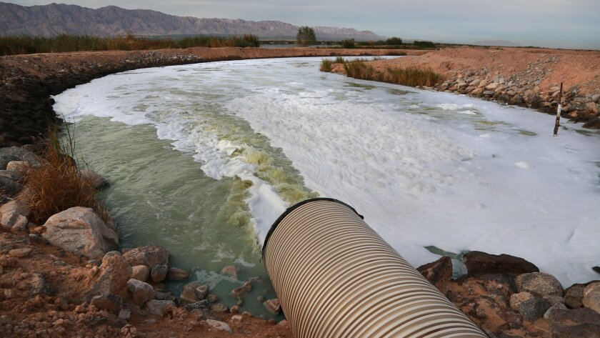 February 7, 2014 Mexicali Vallley, Baja CA, Mexico. Treated water from the Las Arenitas Wastewater Treatment Plant flows into the re-forestation project that is the reviving the marsh upstream of the Rio Hardy, which feeds the Sea of Cortez.