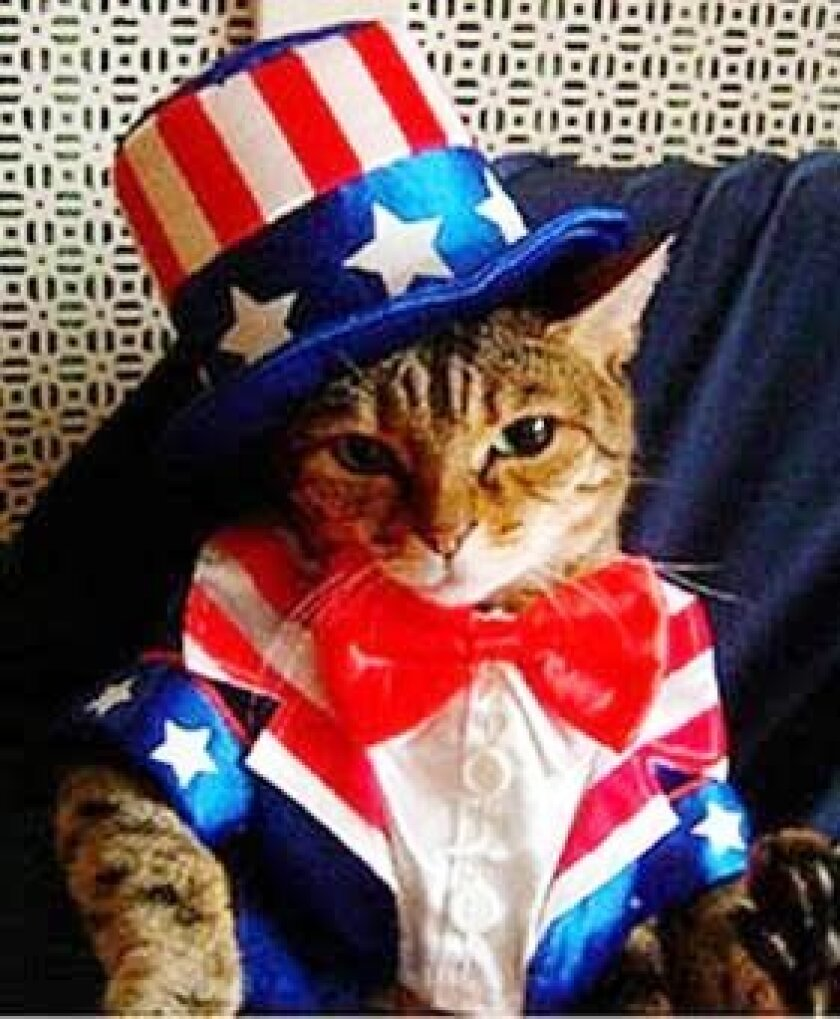 """""""Uncle Sam wants mew,"""" says this patriotic kitty about the July 4 HWAC event."""