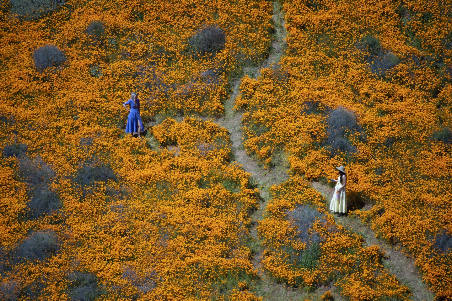 Surrounded by the Super Bloom, visitors pose for photos in the middle of the Lake Elsinore Poppy Fields in Walker Canyon. One day after Lake Elsinore announced it was closing access to the popular poppy fields in Walker Canyon, city officials reopened the entrance to the flowered hillsides, which have been overrun during this year's super bloom.