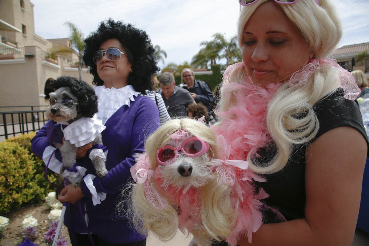 Carissa Musaraca (right) and her dog Mary Jane along with Terri Pobre (left) and her dog Ruffy waited for the results from Whose Dog Looks Most Like Their Owner contest at the Del Mar Ugly Dog Contest held on Sunday. (Nelvin C. Cepeda)