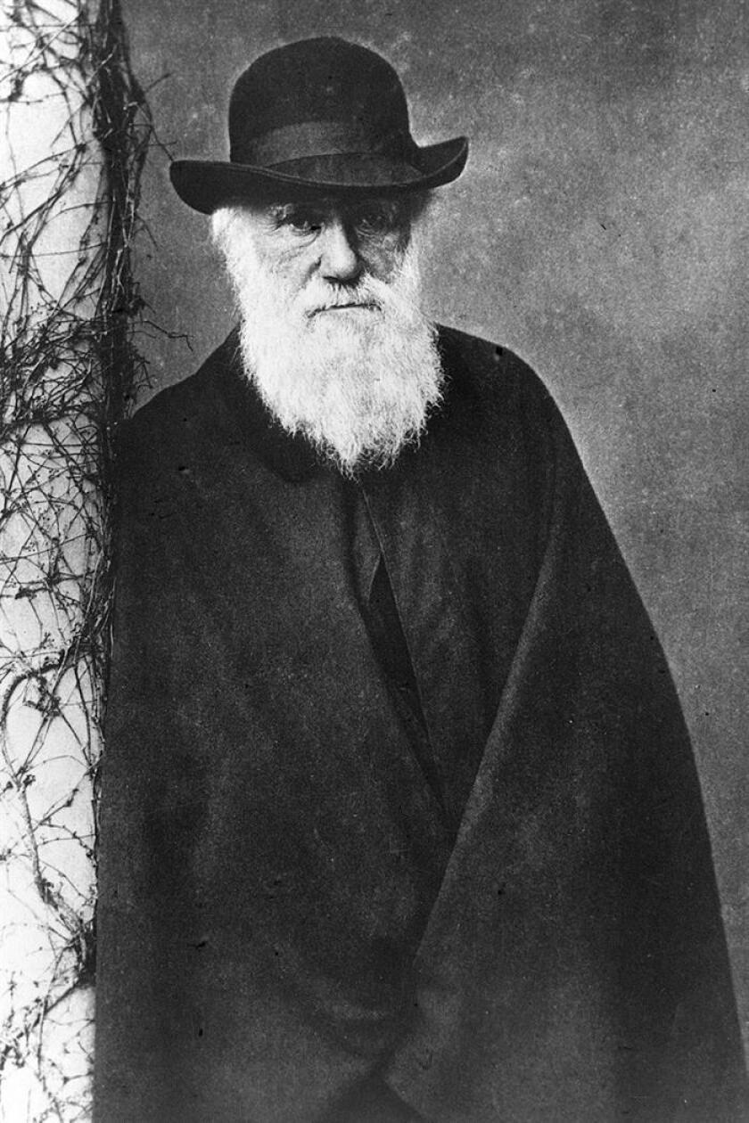 Retrato de Charles Darwin, autor de la Teoría sobre la Evolución de las Especies. EFE/Archivo