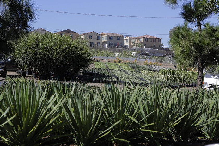 Homes in the Wildgrove by Meritage Homes development in Vista overlook nursery land possibly slated for a cemetery.