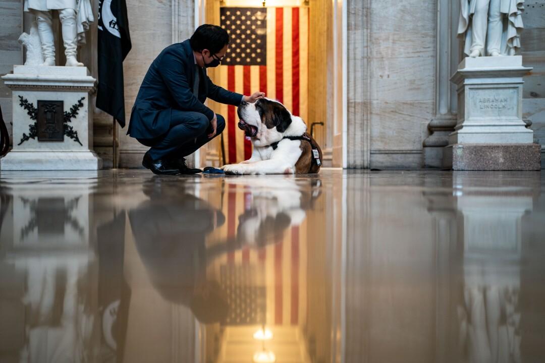 Rep. Andy Kim pets a Saint Bernard