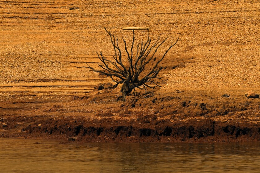 Sunrise illuminates signs of former life amid the dry, steep banks of Lake Shasta, which was at just 42% of its average level on Sept. 30.