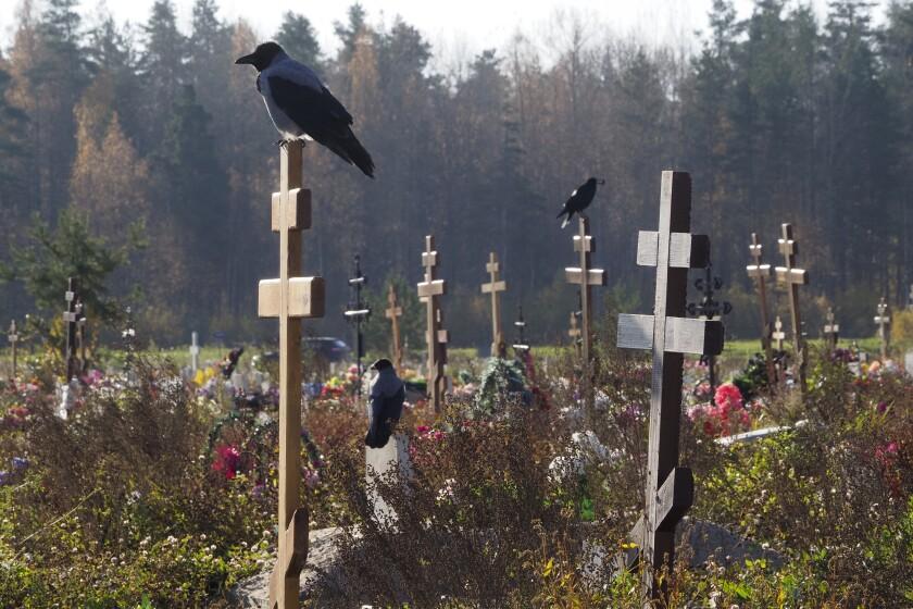 Cuervos posados en las cruces de una sección de cementerio reservada a víctimas del coronavirus