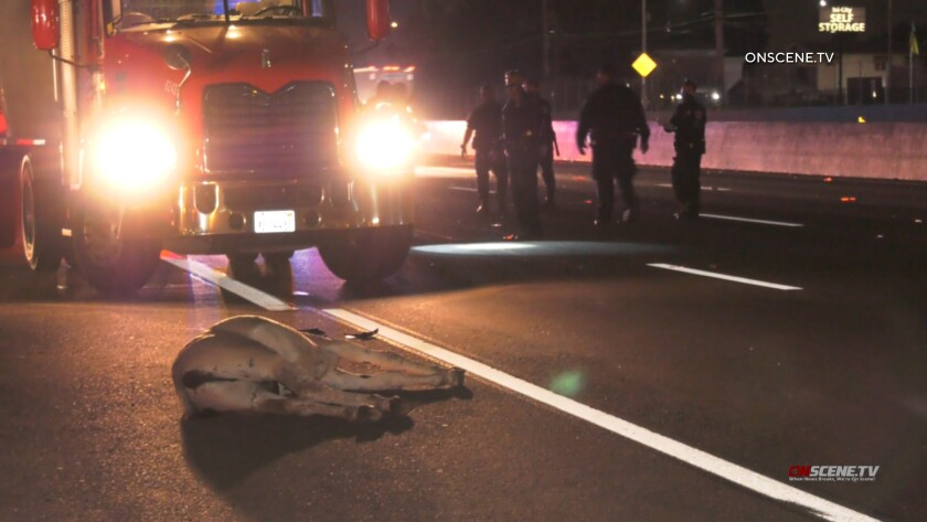 Five donkeys were struck and killed on the 215 Freeway in Riverside County early Tuesday.
