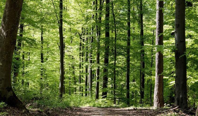 Fotografía cedida por la Secretaría de Medio Ambiente y Recursos Naturales (Semarnat) hoy, viernes 27 de abril de 2018, que muestra una vista general de un bosque en México. EFE/Semarnat/SOLO USO EDITORIAL